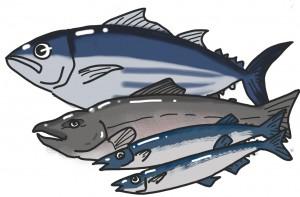 新鮮な旬の魚には良質な油がたっぷり!
