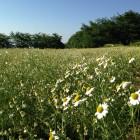 カミツレの里 安寿恵荘(長野県池田町)