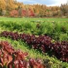 無農薬野菜農家訪問 オルトアサマさん(長野県軽井沢町)